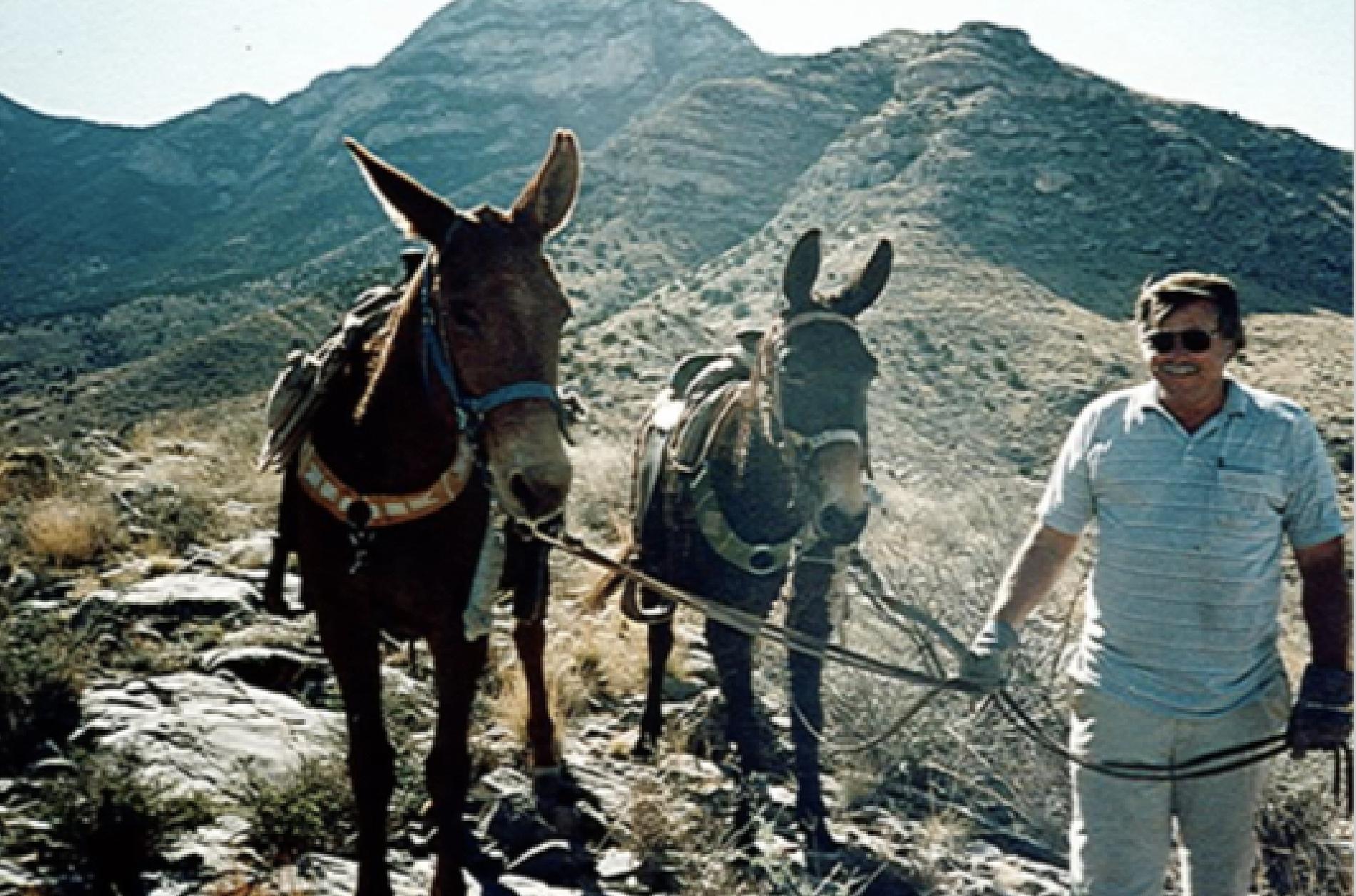 Donkeys@2x